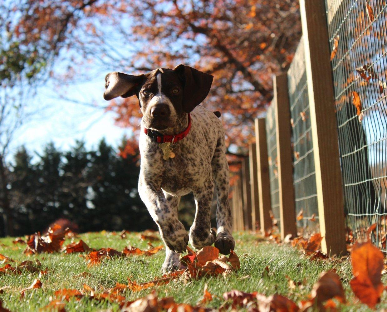 Hundefoder af højeste kvalitet