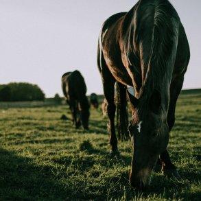 Hestefoder & tilskud