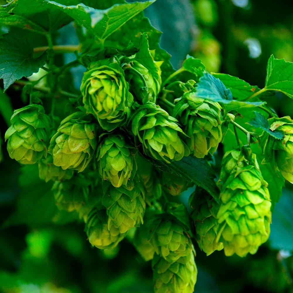 Nordic Herbs